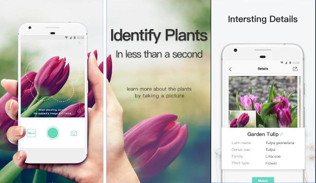 PictureThis 1 - تطبيقPictureThis يمكنك من معرفة أنواع النباتات بواسطة الكاميرا